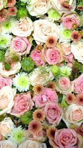 iphone 6 wallpaper floral. Delighful Wallpaper Pinkroseromanticiphone6wallpaperhd With Iphone 6 Wallpaper Floral E