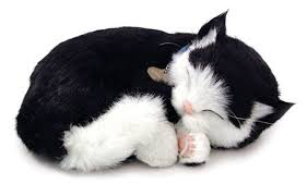 black and white kittens. Simple Kittens With Black And White Kittens K
