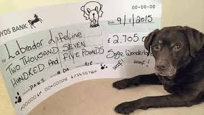 Natural instinct sponsors calendar for charity , Pet Trade News & Events  from Pet Business World UK