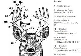 Whitetail Deer Size Chart Deer Score Calculator