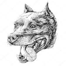 татуировка стаффорд эскиз собаки стаффордширский терьер векторное