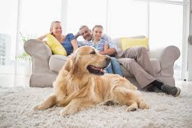 how do i remove dog smell from my home