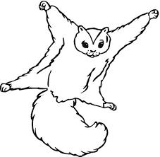 Squirrel Coloring Page Color Book