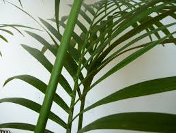 areca palm house plant the 32 best house plants to bring greenery indoors