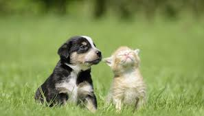 puppy and kitten. Perfect Puppy CaroschiStockGetty Images For Puppy And Kitten N