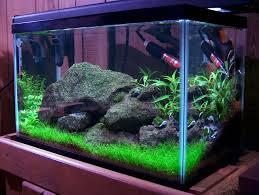 Fun Fish Tank Decorations 17 Best Ideas About 10 Gallon Fish Tank On Pinterest 1 Gallon