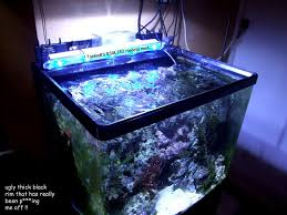 Led Lights For Red Sea Max 250 Red Sea Max 130 130d Rimless Mod Reef Sanctuary