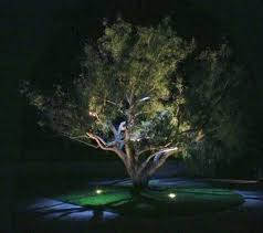 feature lighting ideas. Focus On A Feature Tree In Your Garden. Lighting Ideas