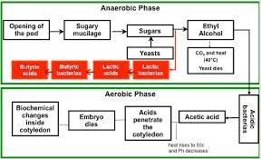 fermentation diagram. in fermentation diagram