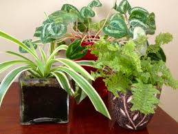 Common House Plants HGTV