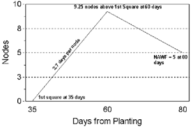 Cotton Growth Stage Chart Development And Growth Monitoring Of The Cotton Plant