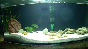 fish tank lighting ideas. Fish Tank Lighting Ideas. Encouraging Ideas D