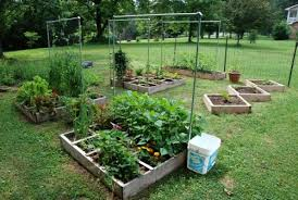 Small Picture Vegetable Garden Layout South Africa The Garden Inspirations