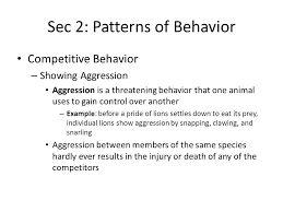 Patterns Of Behavior Inspiration Animal Behavior Chapter Ppt Download