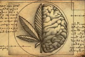 Resultado de imagen para efectos de la marihuana sobre sistema biologico y social