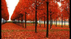 photos of beautiful fall trees