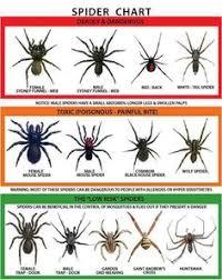 20 Best Spider Chart Images Spider Spider Identification