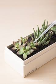 Stop killing your succulents! Learn how to water succulents in non-draining  planters