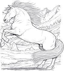 Disegni Da Colorare Cavalli Che Saltano Fredrotgans