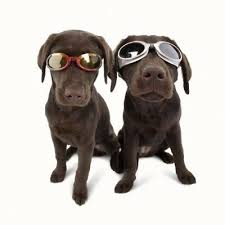 Dog Goggles By Doggles K9 Eye Protection Size Choice Choice Flexible Frames Ebay