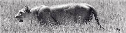 realistic animals to draw.  Realistic U201cMargin Lionu201d Graphite Drawing By Artist Robert Louis Caldwell Inside Realistic Animals To Draw L