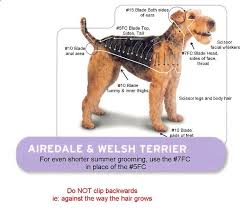 Airedale Weight Chart Airedale Terrier And Welsh Terrier Grooming Chart Dog