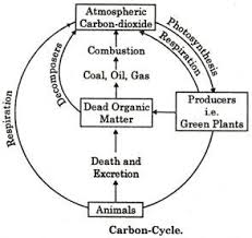 Carbon Cycle Flow Chart 4 Common Biogeochemical Cycles Explained With Diagram