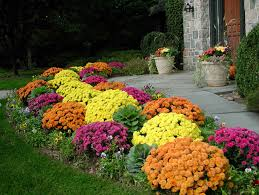 Fall Landscaping Garden Pathway Ideas For Fall Fall Mums Backyard And Plants