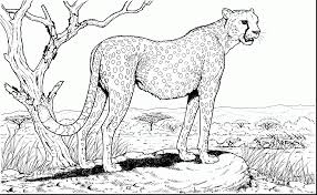 Small Picture Download Coloring Pages Cheetah Coloring Page Cheetah Coloring