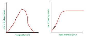 Describing Explaining And Comparing Graphs My Gcse Science