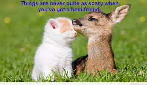 Friendship Love Quote With Animals Animal Quotes Litle Pups