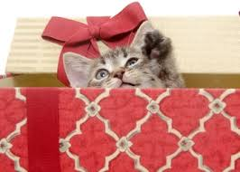 5 Great Holiday Gifts For CatsChristmas Gifts Cats