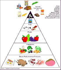 caveman food pyramid professional muscle