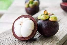 มังคุด ราชินีแห่งผลไม้ไทย ต้นพันธุ์สูง 40-50 ซม.แข็งแรงพร้อมปลูก