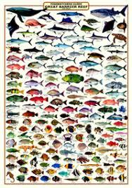 Fishwatchers Guide Great Barrier Reef Great Barrier Reef