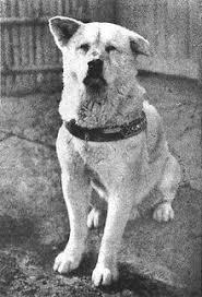 「1948年 - 戦時中に供出された渋谷駅前の忠犬ハチ公像が再建。」の画像検索結果