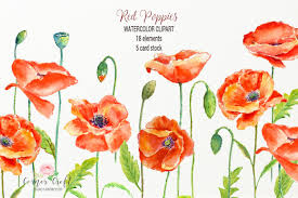 poppy template watercolor red poppy and card template