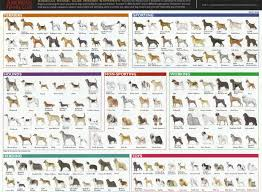 Breeds Of Different Animals On Amazing Charts Earthly Mission