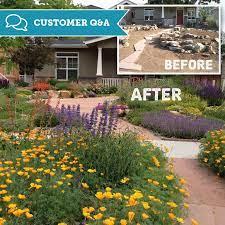 a drought resistant garden