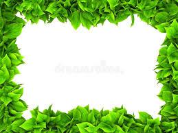 Leafy Green Border Stock Illustrations 2 985 Leafy Green