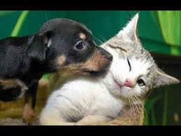 cute kittens and puppies together. Exellent Cute Best Kittens And Puppies Compilation 2013 NEW HD On Cute And Together