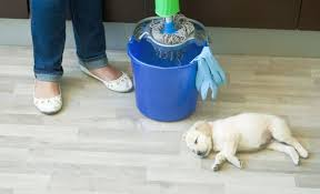 pet safe floor cleaner