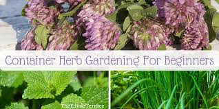 container gardening for beginners. 11 Steps To Container Herb Gardening For Beginners [Video]