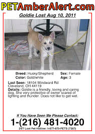 Make A Lost Dog Flyer Zaxa Tk
