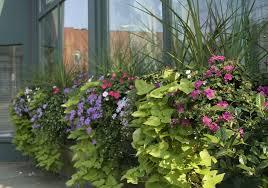 container garden design. Outdoor And Garden: Container Garden Ideas Vegetables Image - Planter Design C