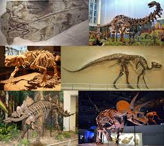 Dinosaur Wikipedia