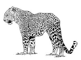 Small Picture Baby Jaguar Coloring Sheets Alpha Male Pages Bulk Color vonsurroquen