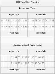 Fdi Notation Charting Tooth Charts