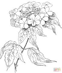 Small Picture Roses Coloring Pages 2 artereyinfo