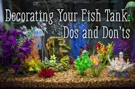 tips for how to safely decorate your fish tank